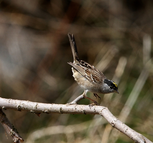 Img_2483a_r