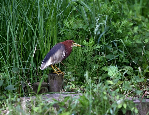 Img_8681a_r