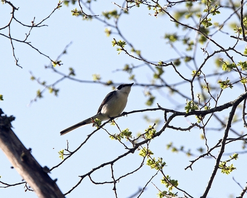 Img_9094a_r